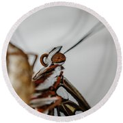 Here's Looking At You Squared Round Beach Towel