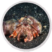 Hermit Crab With Anemone Round Beach Towel