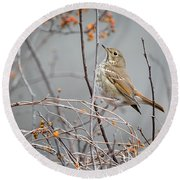 Hermit Thrush Round Beach Towel