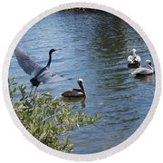 Heron And Pelicans Round Beach Towel