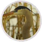 Heron Close Up Round Beach Towel