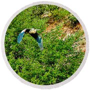 Heron Flies Over Oak Creek In Red Rock State Park Sedona Arizona Round Beach Towel