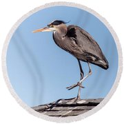 Heron Up On The Roof Round Beach Towel