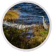 Heron Watchful Eye Round Beach Towel