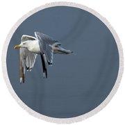Herring Gull In Flight Round Beach Towel