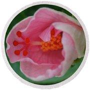 Hibiscus Flower Blooming Round Beach Towel