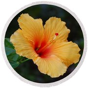 Hibiscus Flower In Puerto Rico Round Beach Towel