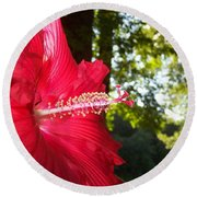Hibiscus - Lord Baltimore Round Beach Towel
