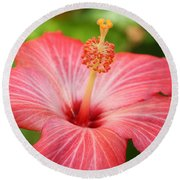 Hibiscus - Square Round Beach Towel by Carol Groenen