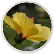 Hibiscus 'sunny Wind'  3407 Round Beach Towel