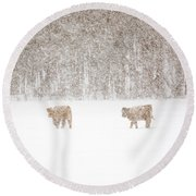 Highland Cattle In The Snow Round Beach Towel