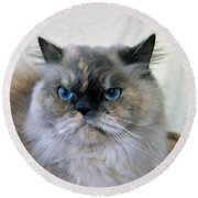 Himalayan Persian Cat Round Beach Towel