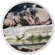Hippo At Leisure Round Beach Towel