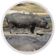 Hippo - Family Round Beach Towel