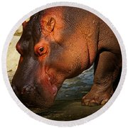 Hippo On The Waterfront Round Beach Towel