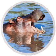 Hippo With Open Mouth In River. Serengeti. Tanzania Round Beach Towel