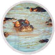 Hippopotamus Group In River. Serengeti. Tanzania Round Beach Towel