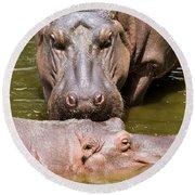 Hippopotamus In Water Round Beach Towel