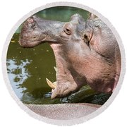 Hippopotamus With Open Mouth Round Beach Towel