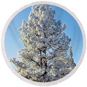 Hoar Frost Ponderos Pine Tree, Sundance Round Beach Towel