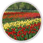Holland Tulip Fields Round Beach Towel