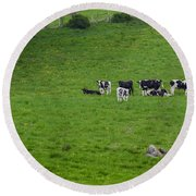 Holsteins Round Beach Towel