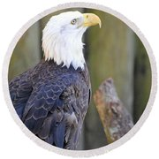 Homosassa Springs Bald Eagle Round Beach Towel