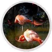 Homosassa Springs Flamingos 5 Round Beach Towel