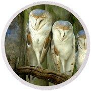Homosassa Springs Snowy Owls 2 Round Beach Towel
