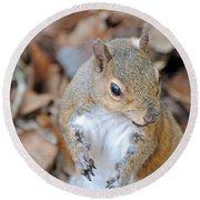 Homosassa Springs Squirrel 2 Round Beach Towel