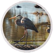 Homosassa Springs Waterfowl 8 Round Beach Towel