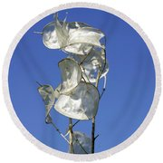 Honesty Seed Pods Round Beach Towel