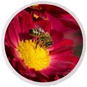 Honey Bee And Chrysanthemum Round Beach Towel by Christina Rollo