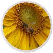 Honey Bee Close Up On Edge Of Sunfower...  # Round Beach Towel