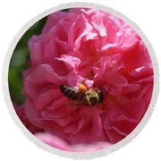 Honey Bee Collecting Pollen On A Pink Rose Round Beach Towel