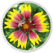 Honey Bee On A Indian Blanket Round Beach Towel