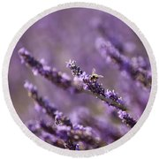 Honey Bee In Lavender Round Beach Towel