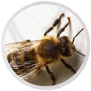 Honey Bee  Round Beach Towel