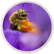 Honeybee Pollinating Crocus Flower Round Beach Towel
