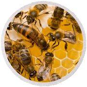 Honeybee Workers And Queen Round Beach Towel