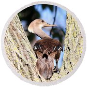 Hooded Merganser Duck Round Beach Towel