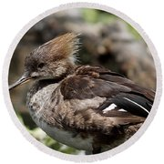 Hooded Merganser Female Round Beach Towel