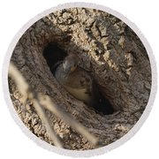 Hooded Merganser In The Knot Hole  Round Beach Towel