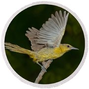 Hooded Oriole Hen At Take Round Beach Towel