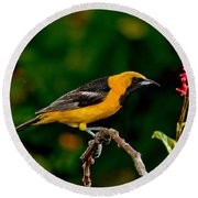 Hooded Oriole Male Round Beach Towel