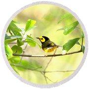Hooded Warbler - Img_9274-007 Round Beach Towel