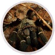 Hornback Baboon Spider Round Beach Towel