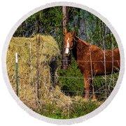 Horse Eating Hay In Eastern Texas Round Beach Towel