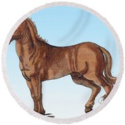 Horse Historiae Animalium  Round Beach Towel