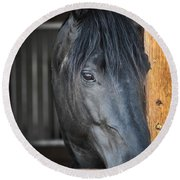 Horse In Stable Round Beach Towel by Elena Elisseeva